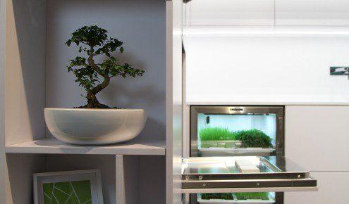 plantes-cuisine-paris-6