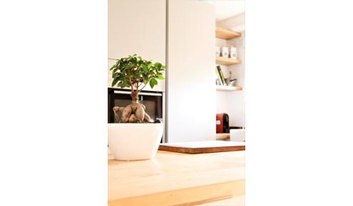 cuisine-sur-mesure-arbre-bambous-paris-6